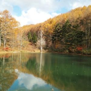 秋のひととき・・・イワナの森