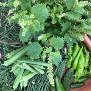 収穫野菜はほぼ緑色