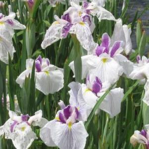 花の開花時期