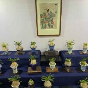 第10回四国山草園 蘭の自慢会
