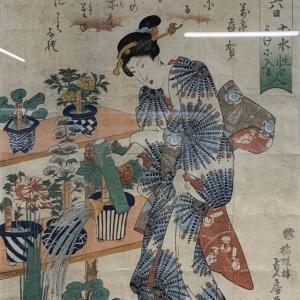 四国山草園 蘭の自慢会 展示品1〜35