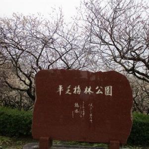 平芝梅林公園(愛知県豊田市)