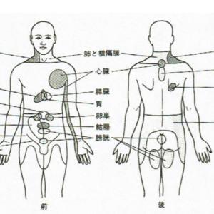 肩、背中、腰が痛い!それって関連痛の場合もある!
