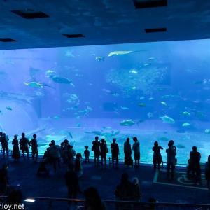 2度目の緊急事態宣言直前に4泊5日で沖縄に行ってきた / Vol.5  地上の竜宮城「美ら海水族館」へ!〜ここは何時間居ても飽きない〜