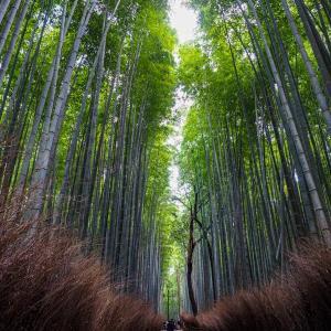 GO TO トラベルを使って秋の京都へ! / Vol.4 嵐山トロッコ列車に乗って天龍寺、竹林の小径を散策して嵐山 渡月橋へ