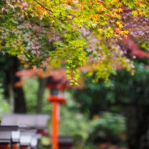 GO TO トラベルを使って秋の京都へ! / Vol.5 紅葉を見ながら鞍馬寺から半日かけて山を越えて貴船神社まで行ってみた 〜山道は大変だった〜