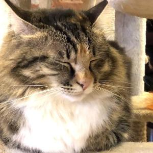 S7(シベリア航空)に乗って2時間半で行けるリトルヨーロッパ!ウラジオストクへ行ってみた /  Vol.14 ロシアの猫カフェ・ヴァレリヤニチ(Валерьяныч)に行ってみた!夕食はなぜか本格インド料理屋へ