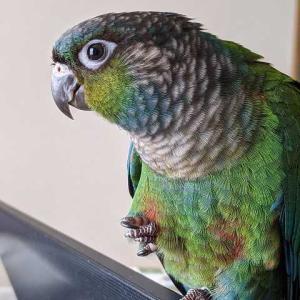 威力業務妨害鳥