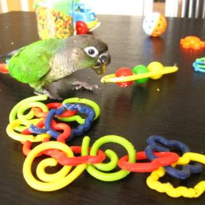 おもちゃで遊ぼ~