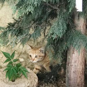 世界の猫  -トルコ編- カッパドキア イスタンブールにて