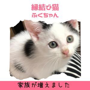縁結び猫ふくちゃんです~
