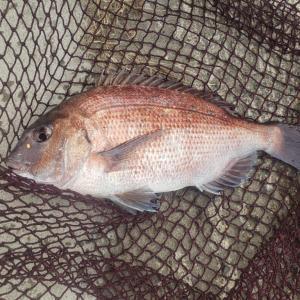 九十九里海釣りセンター子供の攻略法決定!ポイントを嗅ぎ分ける能力が問われる…!