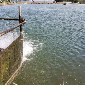 フィッシングフィールド川越のエサ釣り場でルアー釣り!魚影は濃いのか…?