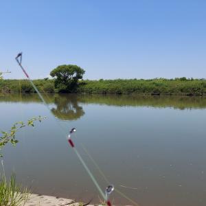 渡良瀬川のハクレンを制御せよ!激短竿「ザンボット」で足元で釣れ!