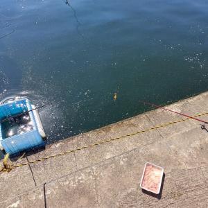 海の管理釣り場をおすすめ!メリットとデメリットや淡水と海水の魚単価を比較してみる!