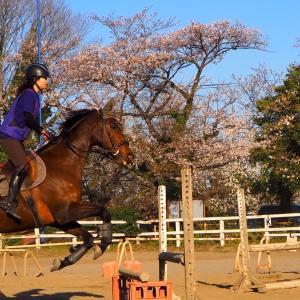 583鞍目〜障害120鞍目〜馬の実力、乗り手の実力