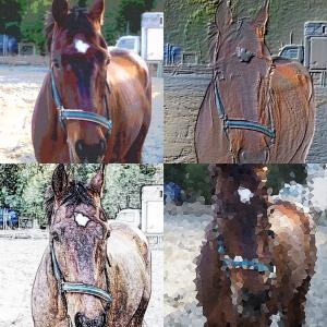 乗馬と馬術