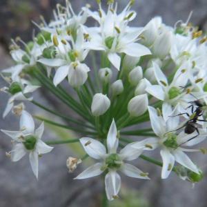白い花と蟻!