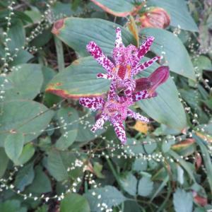 10月末の花たち!