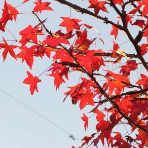 赤い自然の季節