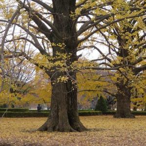 新宿御苑(5)黄色い世界