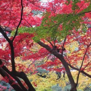 新宿御苑(6)赤黄緑