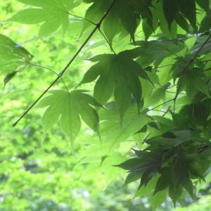 深緑の季節!