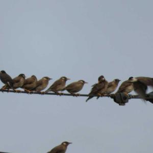 賑やかな小鳥たち!