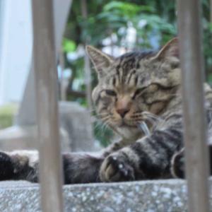 眠たげな団地の猫
