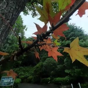 秋がきた!