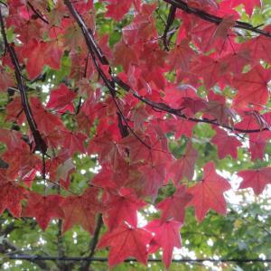 深まる秋!