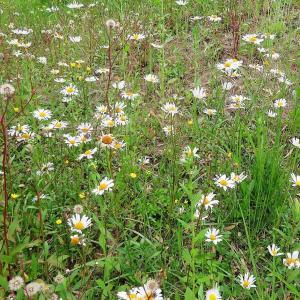 公園の小さな花