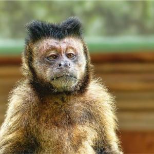 中国人は猿の脳みそを食べるという誤解