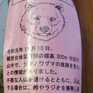 クマがいる贅沢