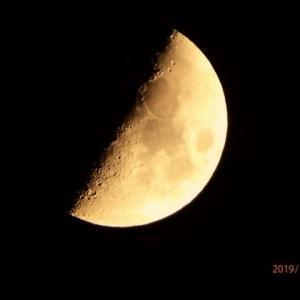 月齢7.0 半月