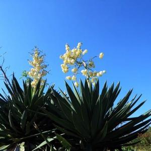 南区磯部 紅葉亭付近に咲く花木