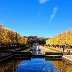 国営昭和記念公園をぶらり散歩(イチョウ並木)