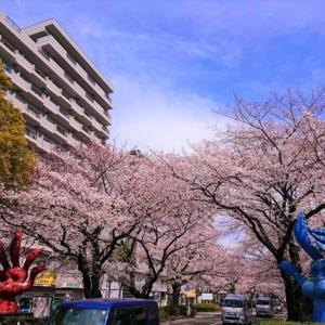 桜吹雪が始まる、