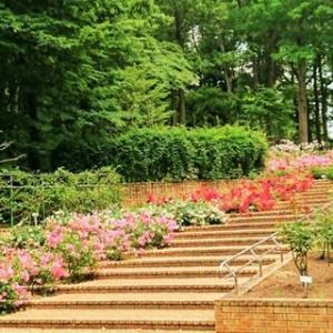 北公園 東フロントの春バラ