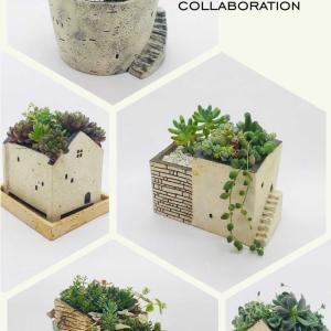 陶芸お家鉢×多肉植物 collaboration作品
