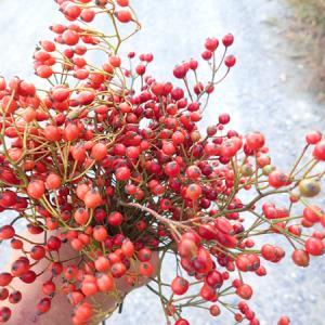 木の実やつるを早めに採集してみたら…