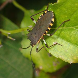 早めのつるや木の実の採集で出会った虫たち