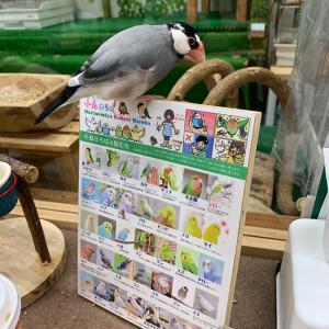 とりカフェにいってきました 大阪森ノ宮 小鳥ひろば