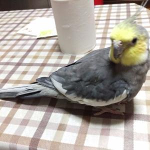 話せばわかる鳥