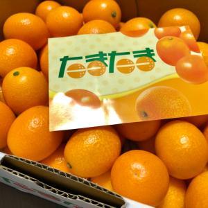 オレンジパワーで乗り切りましょう