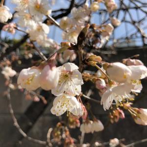 お花で感じる春