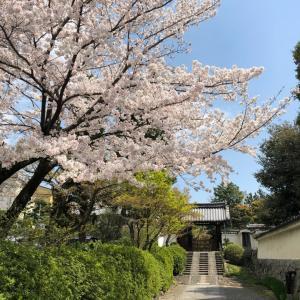 2021春_京都の桜☆開花情報   &    2020想い出桜