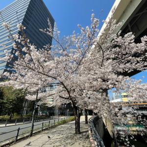 2021春さんぽ_千鳥ケ淵の桜
