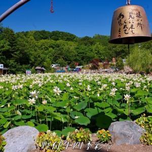 日本最北の蓮池 その2