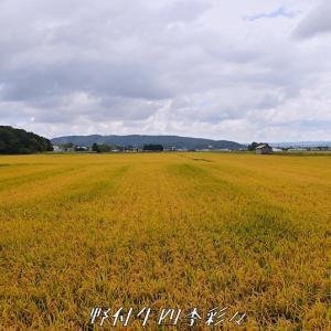 収穫の秋へ
